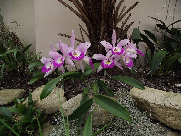 Blc Glorious May (2)