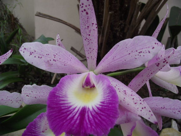 Blc Glorious May (3)