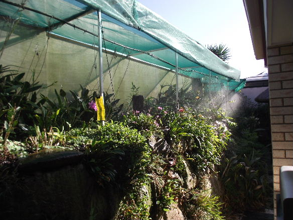 Morning watering on the right part of the wall